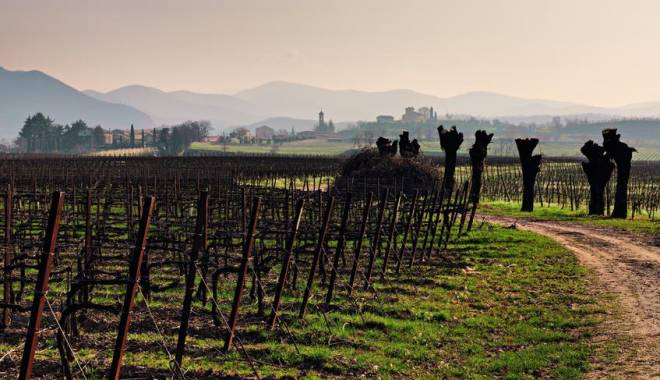 Forbes: Franciacorta  una delle SIX EXCITING WINE REGIONS TO EXPLORE IN 2014
