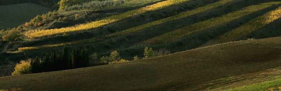 Chianti Classico in corsa per il titolo di Wine Region of the Year
